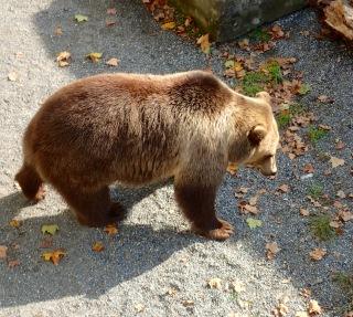 Bear, Bern