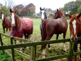 Horses, Cotswolds