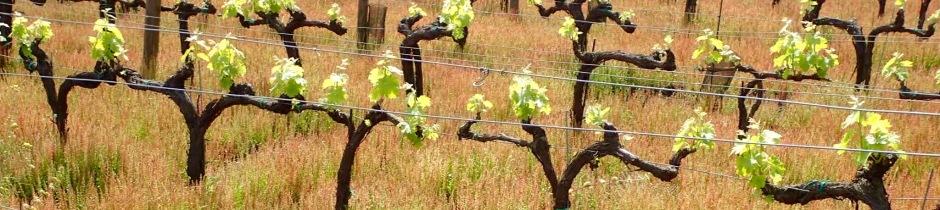 Benanti Winery, Mount Etna