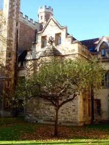 Newton's Tree, Cambridge