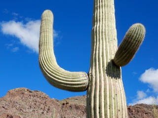Organ Pipe Cactus National Monument A