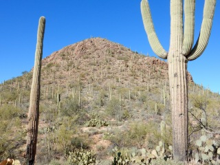 Saguaro National Park AZ