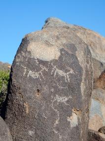 Signal Hill petroglyphs, Saguaro National Park AZ