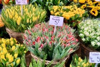 Bloemenmarkt, Amsterdam NL